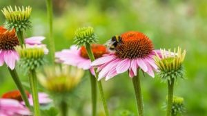 Preparing for Spring Pests and Insects