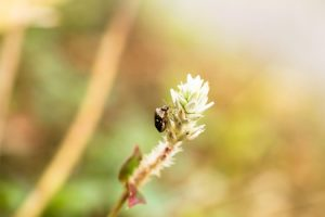 What Mild Winter Might Mean for Insects